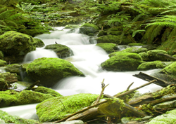environment Biodiversity