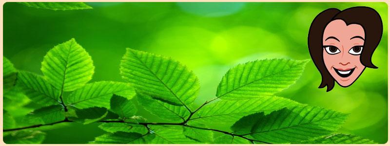 rribbitt Eco Friendly Living: Contact Us